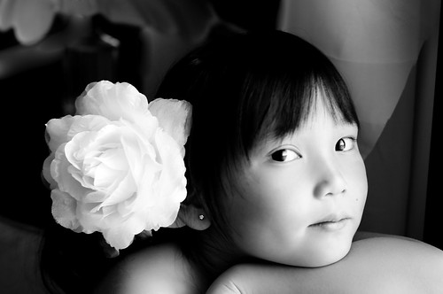 Dahlia white rose 069