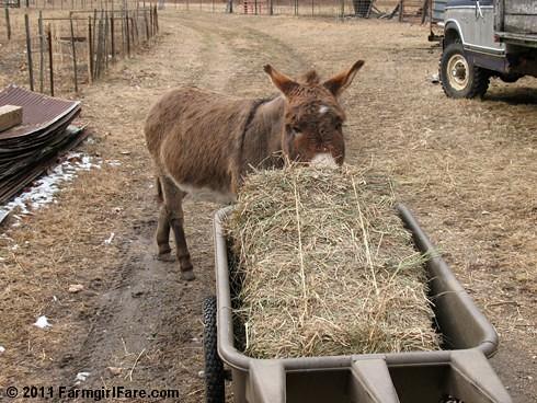 Donkey Dining 3