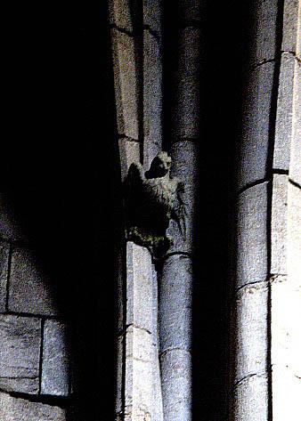 halcon catedral girona