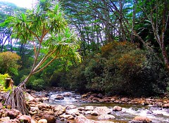 ~~Hawaii-The Big Island #3~~ (TravelsThruTheUniverse) Tags: hawaii thebigisland junglegardens tropicalgardens tropicaljungle tropicallandscapes tropicalplantsgardeninglandscaping exoticplantsgardenslandscapes