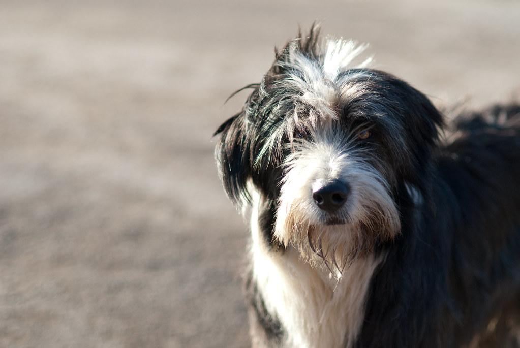 Beeston dog
