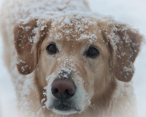 20110204-Snow-on-Ice-09.jpg