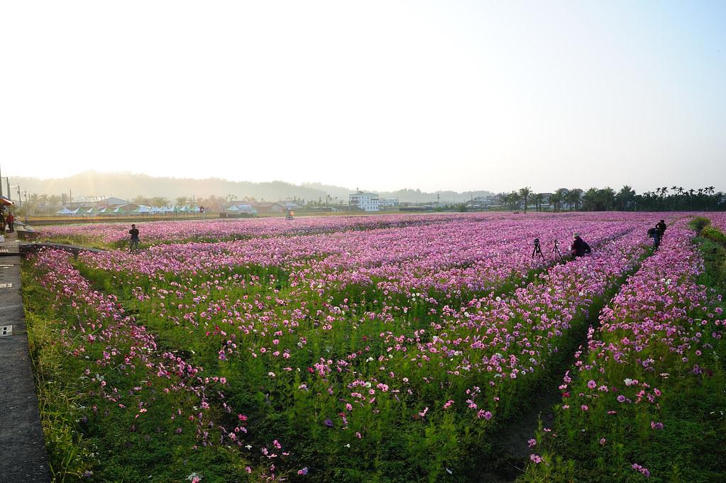 20110206美濃花海_9.jpg