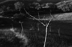 ... tramonto (Blackeyedog) Tags: trees light sunset shadow blackandwhite bw white mountain black tree film alberi analog 35mm landscape tramonto takumar ombra nowhere hc110 super 55mm m42 spotmatic 100 135 legacy prato montagna bianco nero luce paesaggio umbria biancoenero analogica 163 sera bosco pellicola kodakhc110 blackwhitephotos autaut fiuminata hardwaresp salmaregia legacypro freestylearistalegacypro