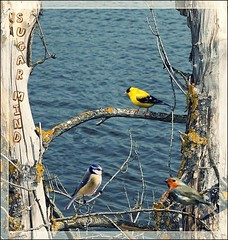 Free Bird (Sugar Mind) Tags: sea tree nature colors birds mare branches ngc natura sugar uccelli mind albero colori vita rami libert composizione emozioni semplicit tripleniceshot mygearandme mygearandmepremium mygearandmebronze