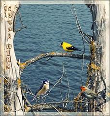 Free Bird (Sugar Mind) Tags: sea tree nature colors birds mare branches ngc natura sugar uccelli mind albero colori vita rami libertà composizione emozioni semplicità tripleniceshot mygearandme mygearandmepremium mygearandmebronze