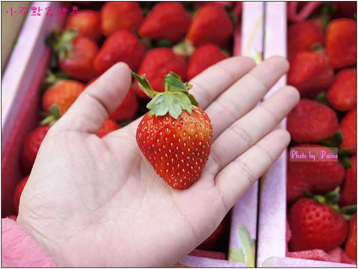 甜柿先生-草莓 (5).JPG