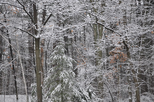 2011-02-08 More Snow 060 by robj_1971