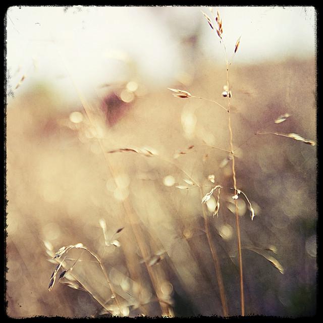 Grass_BlackFrame