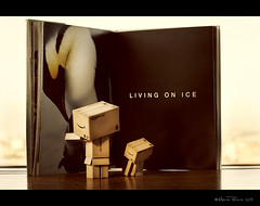 Reading is to the mind what exercise is to the body. ~Joseph Addison (RiaPereira - here and there) Tags: reading knowledge secretlifeoftoys tux knowledgeispower danbo danboard riapereira toyintheframethursday htitft readingaboutpenguins danbobabydanbo penguinpicturebook