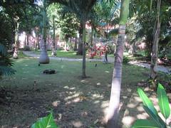 mexico yucatan playadelcarmen yucatanpeninsula quintanaroo playacar riuyucatan