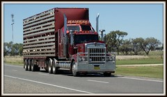 900 Stockcrate. (quarterdeck888) Tags: trucks kenworth stockcrate t900 truckphotos worldtruck jerilderietruckphotos jerilderietrucks