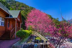 3_MG_7785-Basian Forest Recreation Area, Lishan Scenic Area, Guguan, Taichung, Taiwan ---------- (HarryTaiwan) Tags: taiwan                       harryhuang hgf78354ms35hinetnet