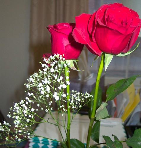 Roses, close up