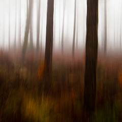 Woodland Impressions (Andy Brown (mrbuk1)) Tags: trees mist abstract blur grass lines fog square landscape woods forrest surreal devon trunks panning autumnal icm undergrowth ashcombe