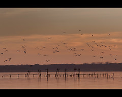 Lago di Massaciuccoli (Orione Photographer) Tags: italy animals canon lago eos is italia raw tramonto natura uccelli tuscany toscana acqua inverno 70200 animali massaciuccoli bellitalia
