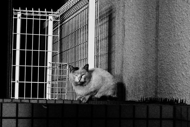 Today's Cat@2011-02-24
