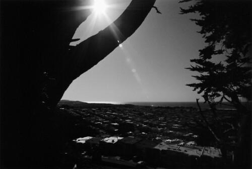 Sun Flare & Tree