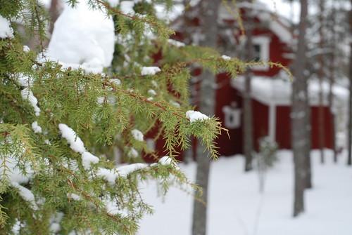 winter/talv