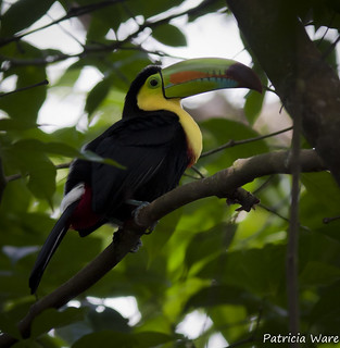 I can Toucan!
