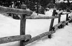 Troncos (G. Arias) Tags: madrid espaa blanco sol k madera y pentax d nieve negro guillermo 20 javier valla arias photon navacerrada montoro cotos mengotti