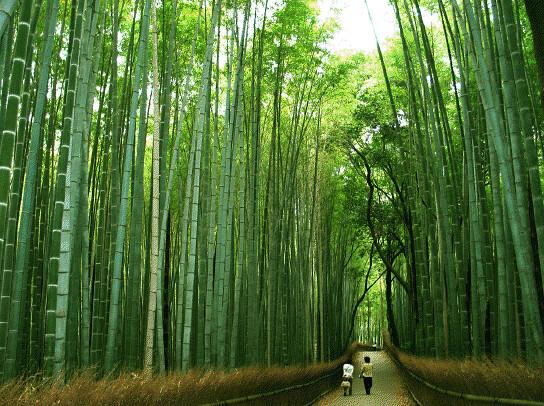 Kyoto Saudade