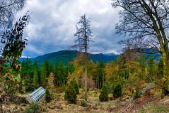Benmore Botanic Garden (duncanreddish) Tags: trees sky mountain west clouds forest garden landscape scotland nikon argyll victorian fisheye botanic peninsula 8mm hdr fernery bute rbge benmore cowal d90