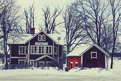 (- M7D . S h R a T y) Tags: winter snow cold tree sweden stockholm kingdom february feb kingdomofsweden wordsbyme allrightsreserved