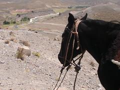 Cabalgata por los Castillos de Pincheira (julieta.bonazza) Tags: horse argentina ro river caballo mendoza montaas castillos pincheira malarge