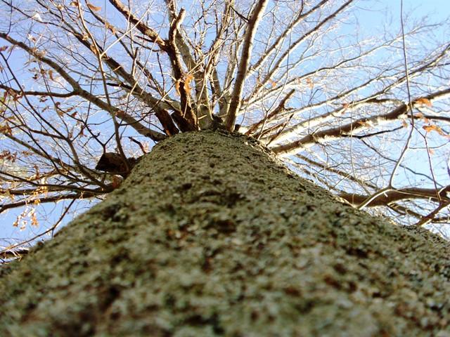 tree climbing 056