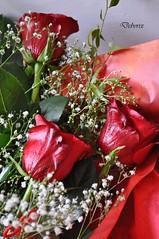 tre rose (Debora Matteis) Tags: red rose rosa rosso mazzo fiorellini bunchofroses