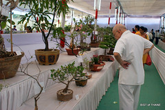 Baagon Mein Bahaar Hain (Raju Bist) Tags: show india flower tree green fruit tmc vegetable exhibition environment maharashtra thane vrukshavalli2011 ornamentalflowerdecoration