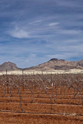Arizona Vineyards