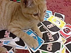 ألاليت توكي يعود يوما (Rabab nmr) Tags: cat kitten kittens قطوه قطو بسه بسينه نوكي
