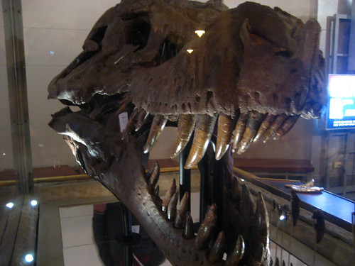 Sue's skull