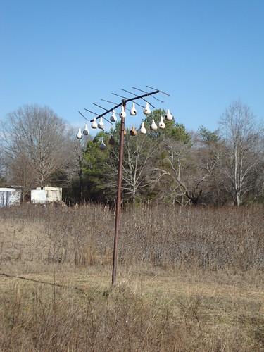 Gourd Tree, Winston County AL