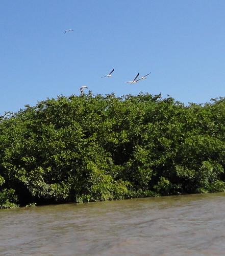 Palo Verde, Isla Pájaros