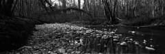 Les galets du Veyron (Tonton Dave) Tags: panorama nature monochrome forest river landscape rivière linhof paysage forêt technorama galets