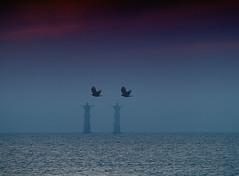Double up (Jeanette Svensson) Tags: ocean blue sea sky lighthouse water birds canon 7d doubleup 6194 ultimateshot canonefs18200 jeanettesvensson