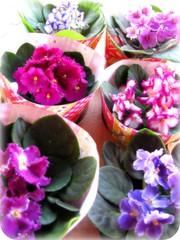 5 Flower ... (Joana Joaninha) Tags: casa flor quintaflower feliz violeta joanajoaninha hellennilce