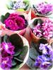 5° Flower ... (Joana Joaninha) Tags: casa flor quintaflower feliz violeta joanajoaninha hellennilce