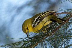 #850B2119 (Zoemies...) Tags: birds pantai balikpapan minoltaamount ambalat zoemies