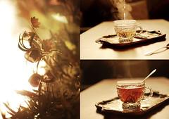 (Ebtesam.) Tags: morning flowers sun sunlight flower 35mm nikon tea saudi arabia jeddah riyadh saudiarabia chai kingdomofsaudiarabia 35mm18 nikond40x  ebtesam ebtesamabdullah