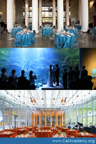 weddings-CA-academy-of-sciences