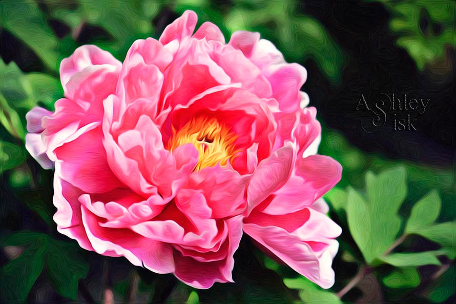 Pink Flower - Oil Painting RS