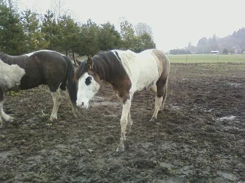 Horse Supplies: Horse Supplies Townsville