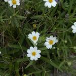 Wildflower_Center_078 thumbnail