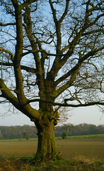 037_edited-1 (Casatigeo) Tags: statelyhome englandcountryside wortleyhall syorkshire