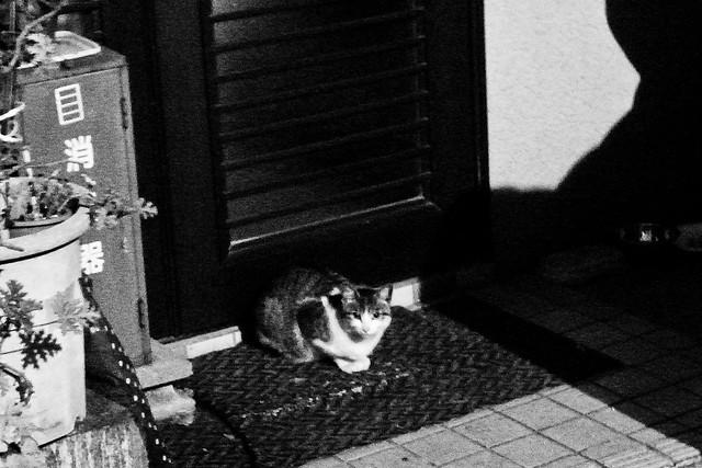 Today's Cat@2011-04-03