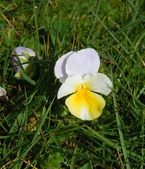 Frühling9